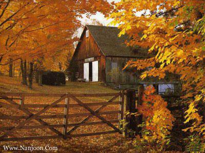 http://nanjoon2.persiangig.com/image/2/1/TreeAutumn_(3).jpg